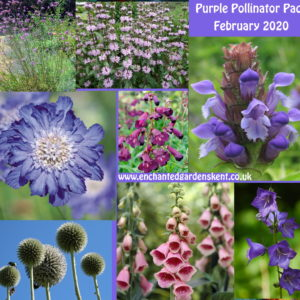Purple Pollinator Packs